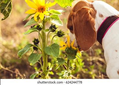 A Dog In The Garden