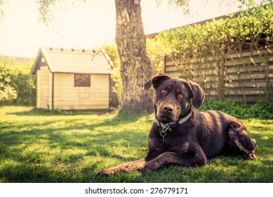 Dog in a garden with a dog house