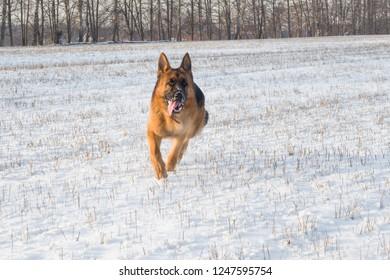 GERMAN SHEPHERD T-SHIRT ALSATIAN  IMPRESSIONIST DOG PRINT 15 COLS