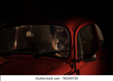 dog German Shepherd Sitting in a Red Car, Traveling with a Pet
