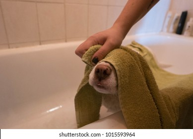 dog gets dry after a shower