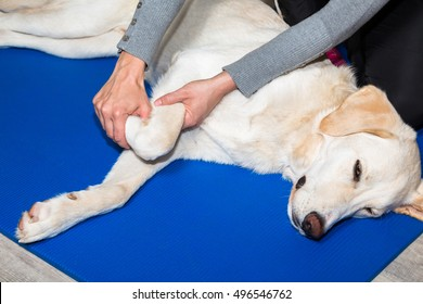 dog gets treated at the legs in clinic