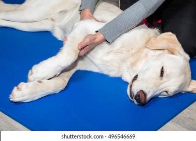 dog gets treatment