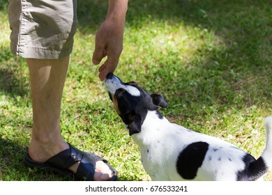 Dog getting to know a person by sniffing his hand