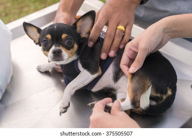 dog getting physical therapy