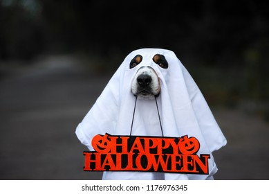 dog in a ghost costume close up portrait with a happy halloween sign