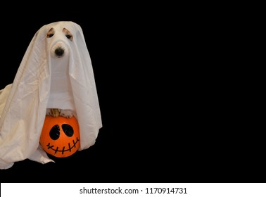 DOG IN A GHOST HALLOWEEN COSTUME UPLOADED IN A PUMPKIN AGAINST BLACK BACKGROUND