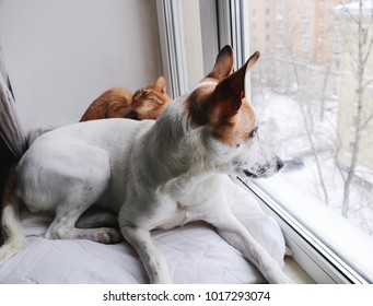 Dog and Ginger cat lies on a pillow at a window, looks out of the window