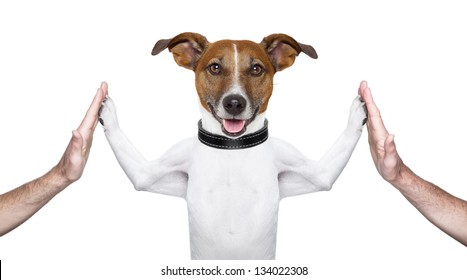 dog giving high five on both sides with male hands