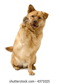 Dog giving a high five with paw