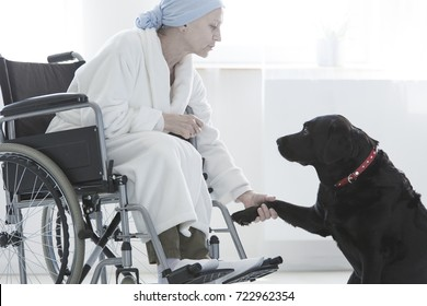 Dog giving paw disabled woman sitting with dressing-gown in wheelchair at hospital