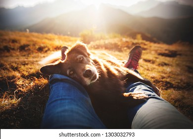 Dog is giving the paw. Dog in the mountains with his owner. Traveling in the Dolomites.