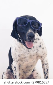 dog with glasses