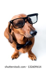 Dog with glasses and a bow tie