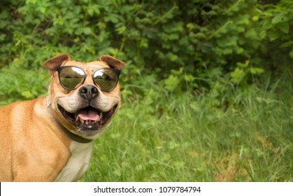 Dog in glasses, golden retriever with sunglasses, funny dog, dog-smiling