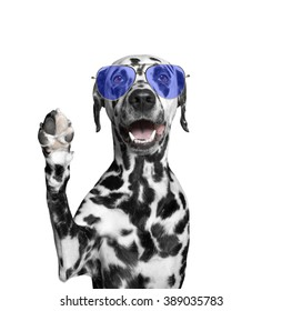 The dog in glasses is greeting you