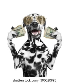 Dog in glasses holds in its paws a lot of money -- isolated on white background