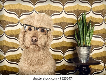 Dog with glasses in a retro setting