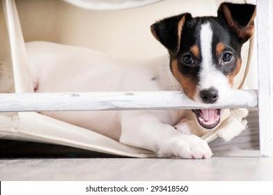 Dog gnaws closet