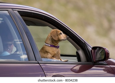Dog going for a ride.