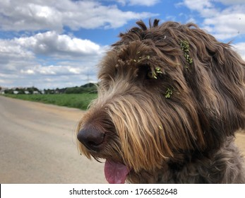 dog with green burdock on the face