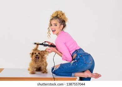 Dog grooming. Pet salon. Petshop. Dog salon. Beauty salon for animals. Grooming master making dog hairstyle. Pet grooming. Animal clinic. Vet.