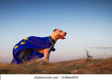 Dog guard of the European Union, superdog. Portrait of Dogo Argentino dog with EU flag during a golden hour