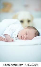 Dog Guarding Sleeping Newborn Baby Girl