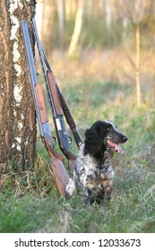 Dog with guns under a tree