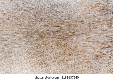 Dog hair as background