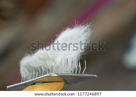 Dog Hair On Pet Comb After Stock Photo Edit Now 1177246897