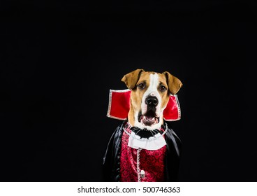 Dog in halloween costume dressed up as vampire