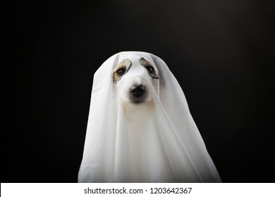 DOG HALLOWEEN GHOST COSTUME PARTY, ISOLATED AGAINTS BLACK BACKGROUND