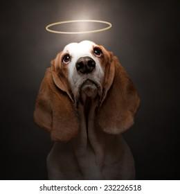 dog with halo