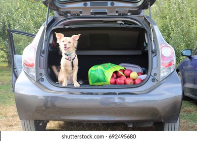 Dog hanging out in back of car