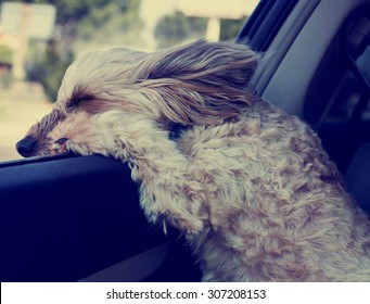 dog hanging out a car window while driving with fur blowing in the wind and eyes squinting with a shallow depth of field and a retro instagram filter
