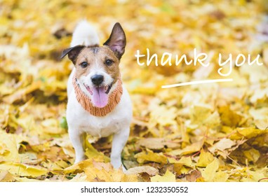 Dog with happy and thankful face expression on fall (autumn) leaves as a Thanksgiving concept