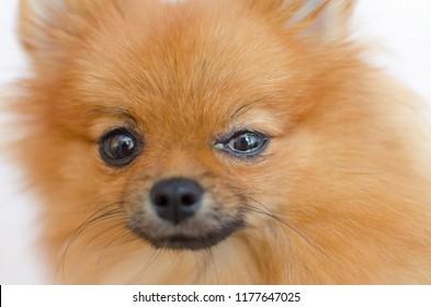 a dog has an eye problem, conjunctivitis