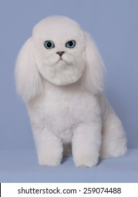 A dog has the face of a cat.