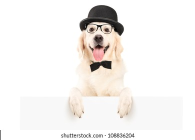 A dog with hat and bow tie standing behind a white panel, isolated on white background