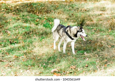 Dog having fun outside in nature