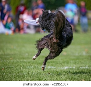 A dog having fun at a public park on a hot summer day