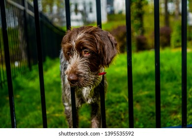 dog with head stuck in fence