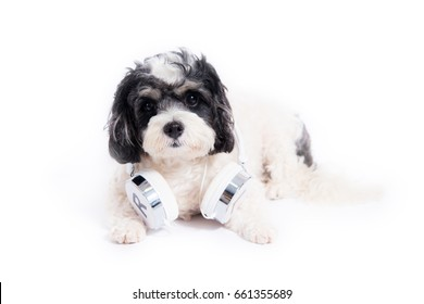 Dog with headphones isolated on white