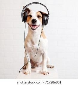 Dog in headphones listening to music. Happy pet
