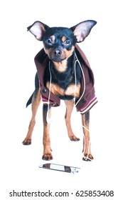a dog with headphones on white background