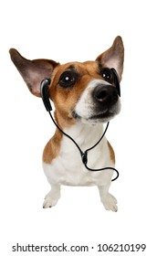 Dog with headphones.Cute Jack Russell terrier dog listening to music on earphones on white background