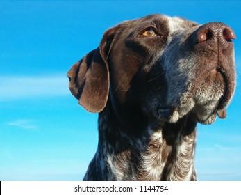 dog headshot