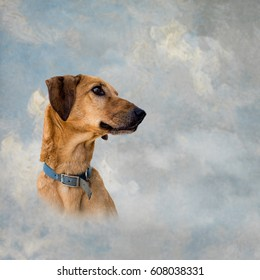 Dog heaven. Brown mongrel pet dog over artistic textured gray and blue sky. Ideal pet funeral services etc, with copy space.