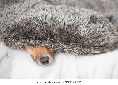 dog hiding under a fluffy cushion - shallow d.o.f.